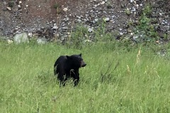 Banff and Jasper NPs