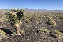 The desert floor is rock