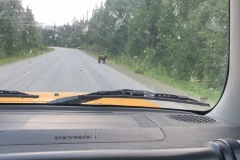 Hello Mr. bear