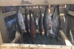 Fish drying at the Tonsina River Lodge