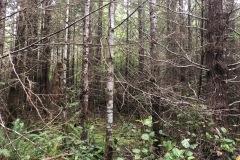Dense Rain Forest