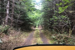 Remote forest road to the campsite