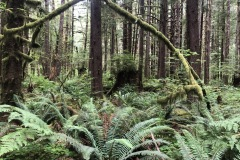 The ferns are tall